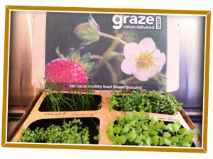 Graze.com Box Design and Packaging