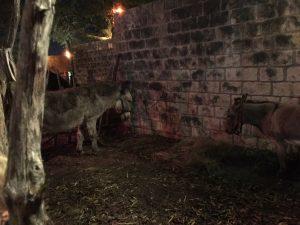 Main Street Bethlehem - Donkeys